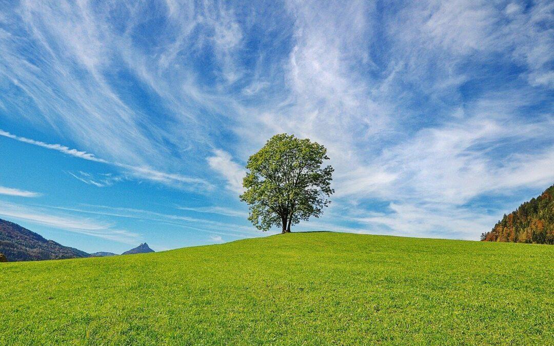 Jak pielęgnować trawnik wiosną?